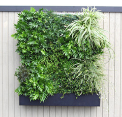 Plant Connection Long Island Ny Green Living Walls Retail And Diy Products