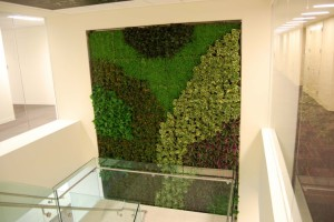 Green Wall Design By Plant Connection; View Newsletter