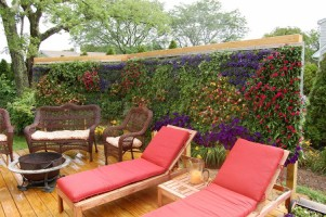 The Annual Living Wall Not Only Looks Beautiful, It Helps Cool The Deck  Area And Helps To Reduce Noise From An Adjoining Neighboru0027s Driveway On The  Other ...