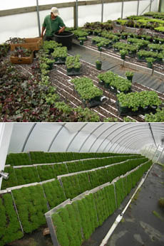 How The G O2® Living Wall System Works