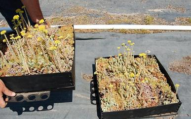 Our Green Roof Products Green Walls Amp Green Roofs